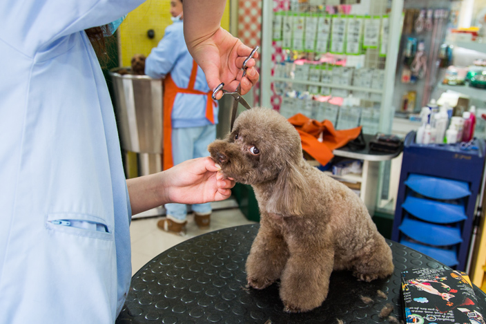 How Pets Became China's New Status Symbol