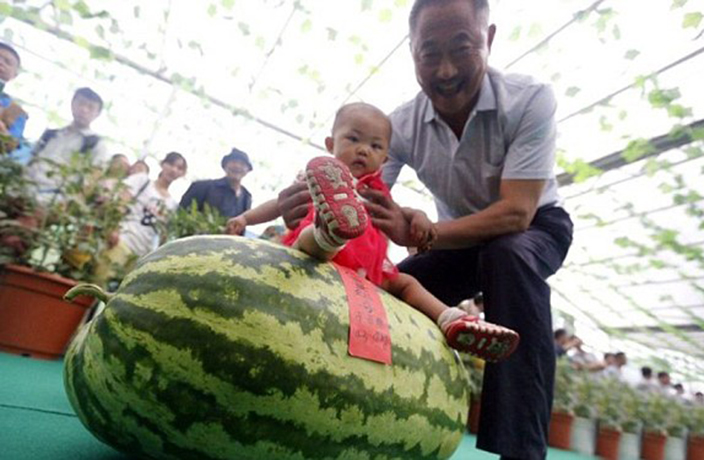 Melon King Crowned in Beijing for 176-Pound Watermelon
