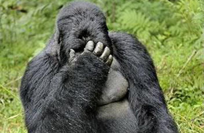 No Harambe Mcharambeface Did Not Win Gorilla Naming