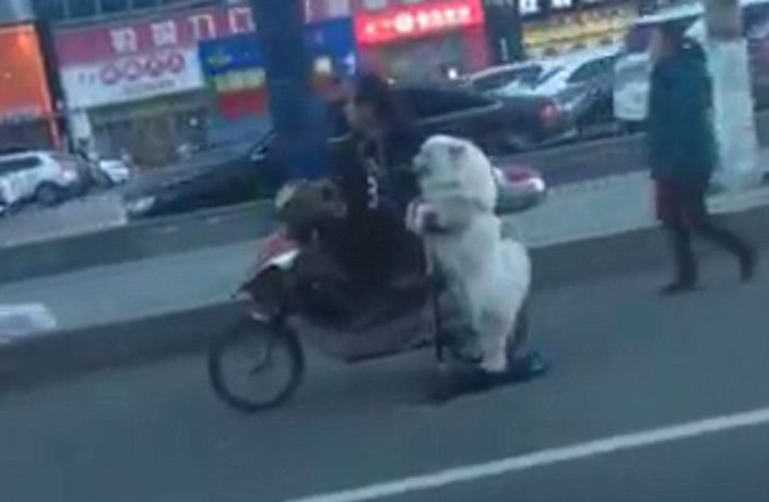 WATCH: Dog Rides Scooter in Bizarre Viral Video from China