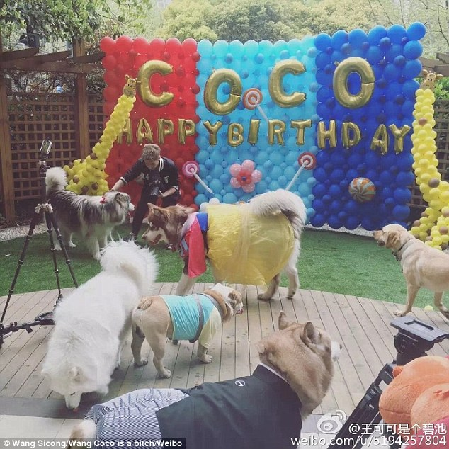 10 Photos That Prove Wang Sicong's Dog Lives Fancier Than You Do