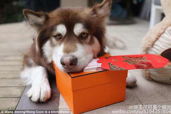 Wang Sicong dog hongbao