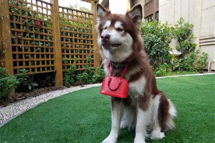 Wang Sicong dog purse