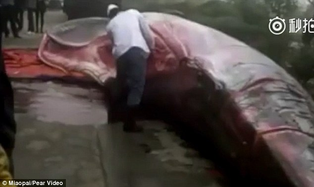 Chinese Company Slaughters Whale to Serve at Canteen