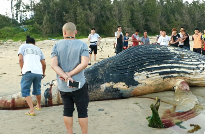 Yet-Another-Dead-Whale-Washes-Ashore-in-South-China-4.jpg