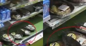 Rat Spotted at FamilyMart in the Shanghai Metro