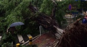 Epic Storm Downs Trees, Floods Roads in Guangdong and HK