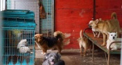 These Volunteers are Trying to Save 600 Stray Dogs, and They Need Your Help