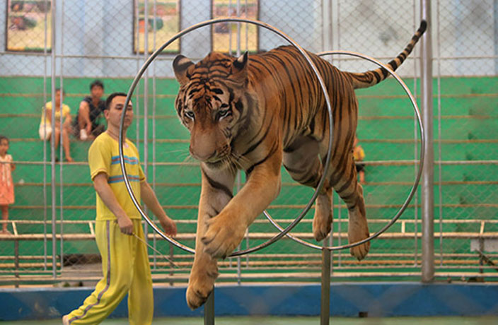 Defiant Animal Circus Refuses to Close at Guangzhou Zoo