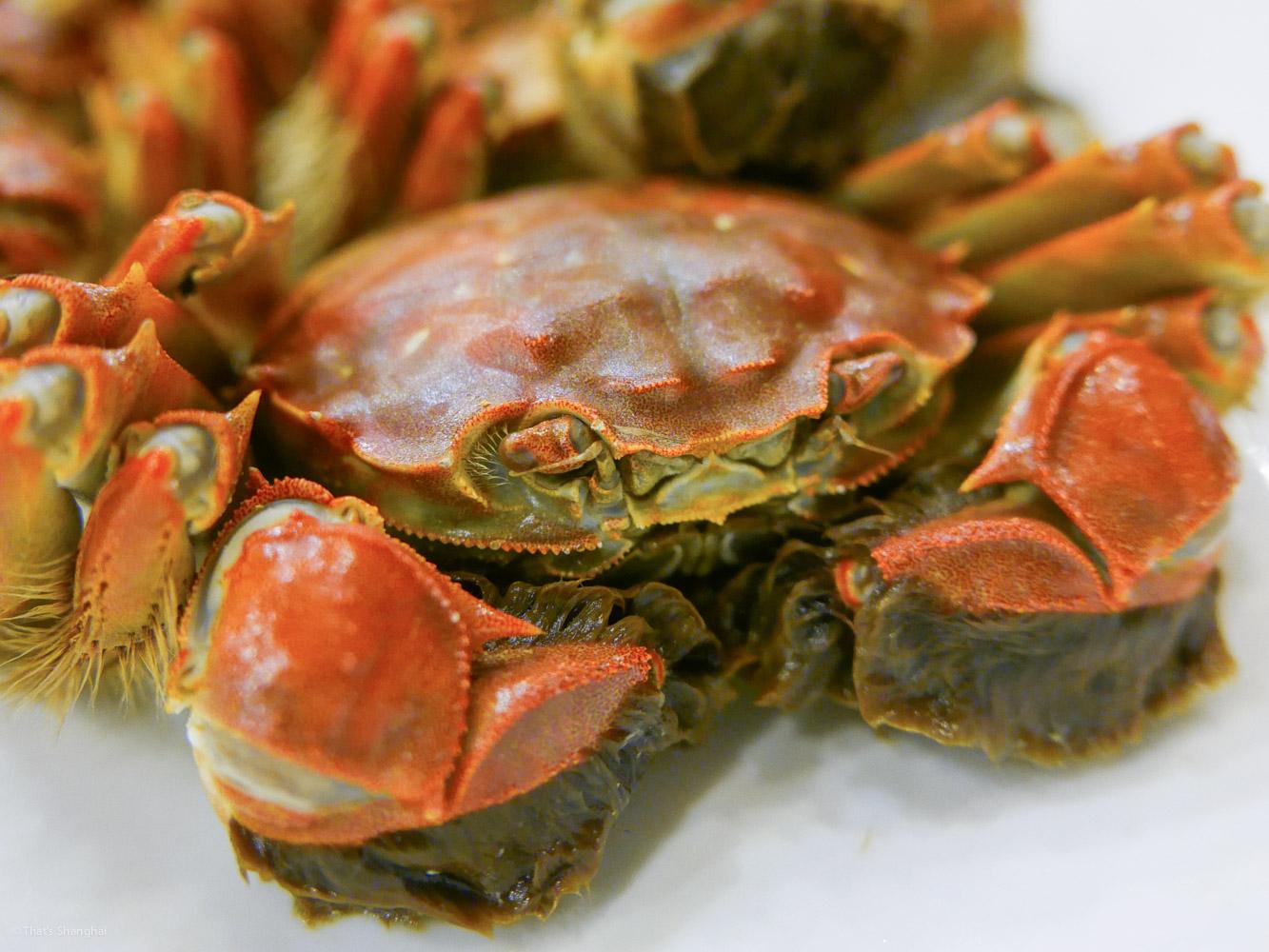 Hairy Crab in Shanghai