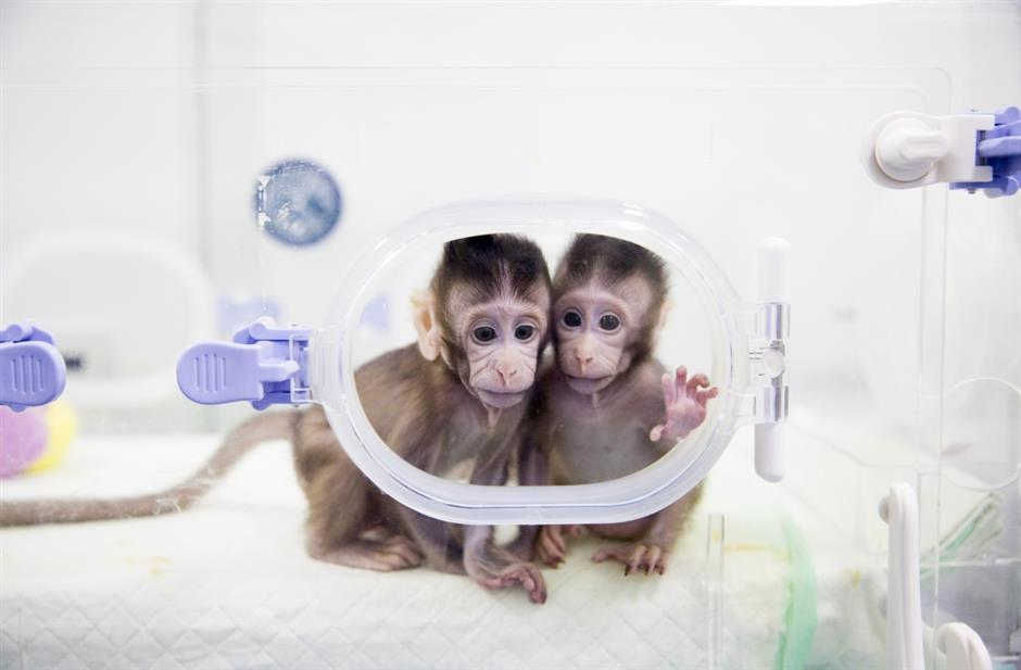 Meet the World's First Cloned Primates
