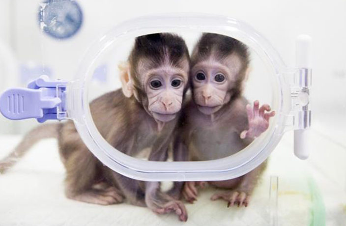 Chinese Scientists Successfully Clone Monkeys in Shanghai