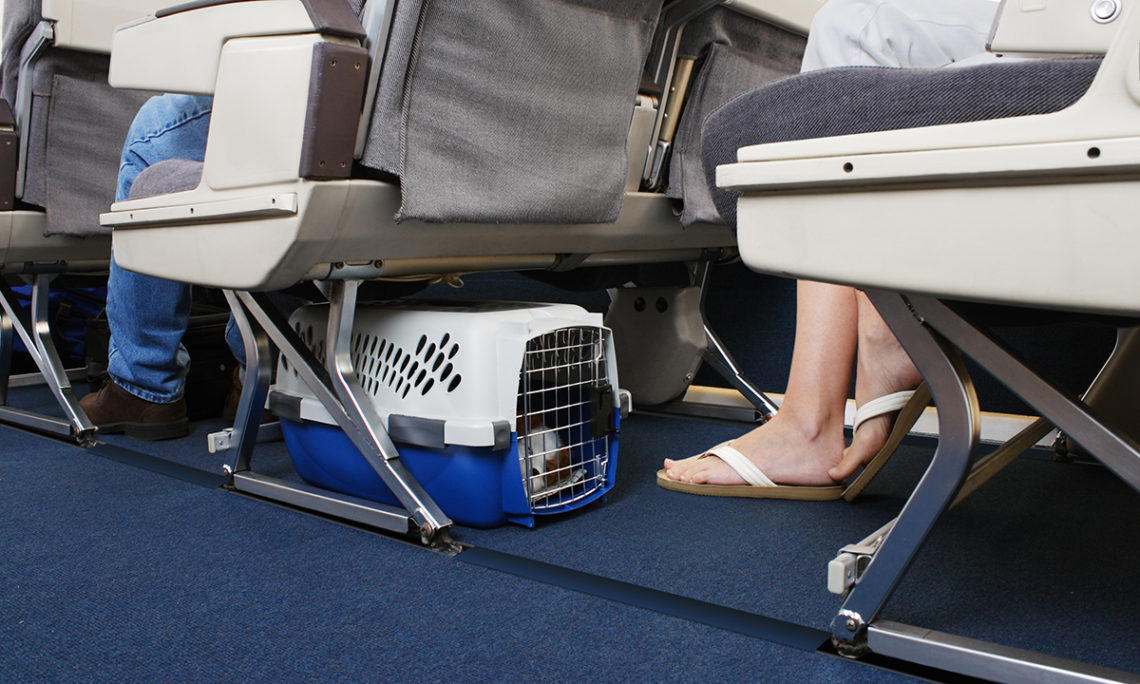 Pets Now Allowed in Cabins on Hainan Airlines Flights
