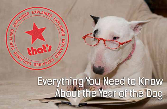 Explainer: Everything You Need to Know About the Year of the Dog