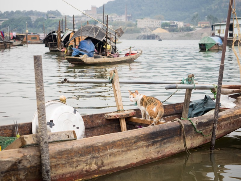 A-cat-stands-sentry-on-a-fishing-boat-in-Datang.jpg