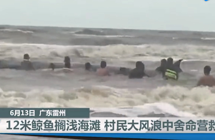 WATCH: Stranded Whale Dies on South China Beach