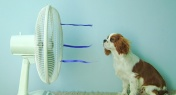 Survive the Summer Heat with These Powerful Fans