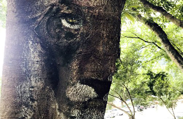 Can You See it? Feline Face Spotted on Tree in Foshan