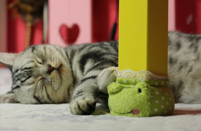 5 of the Cuddliest Cat Cafes