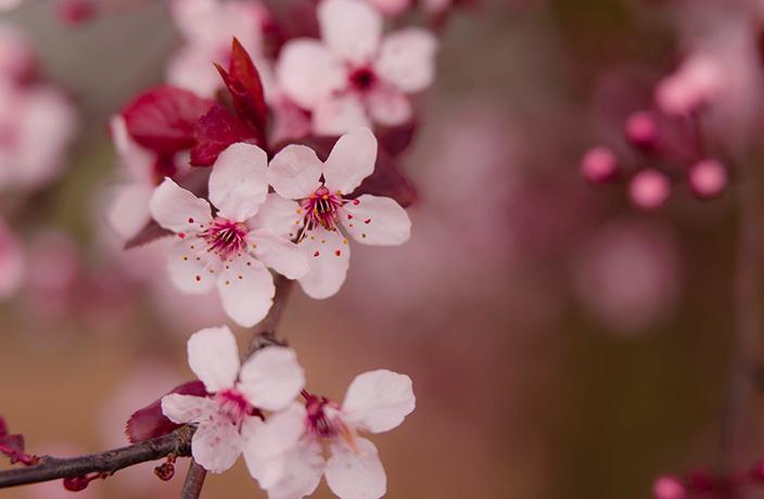 201903/bloom-blossom-branch-432360.jpg