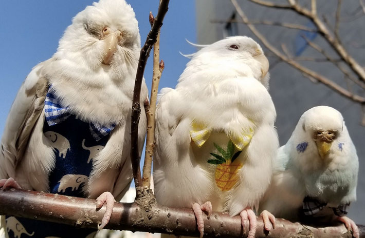 Chinese Woman Makes ¥30,000 a Month Selling Bird Diapers