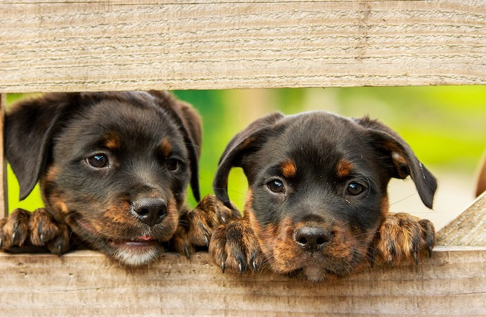 It's Now Illegal to Own Mixed Breed Dogs in Shanghai