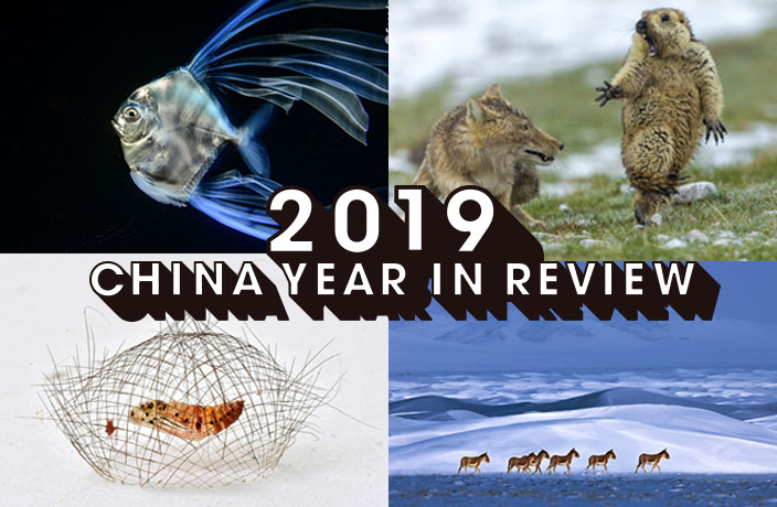 5 Chinese Winners in Wildlife Photographer of the Year 2019