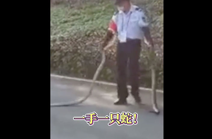 WATCH: 2-Meter Snakes Caught by Bare-Handed Guard in Shenzhen