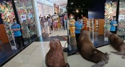 Walrus Paraded Around Guangzhou Mall Outrages Netizens