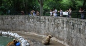 Visitors Witness Bears Kill Breeder at Shanghai Wild Animal Park
