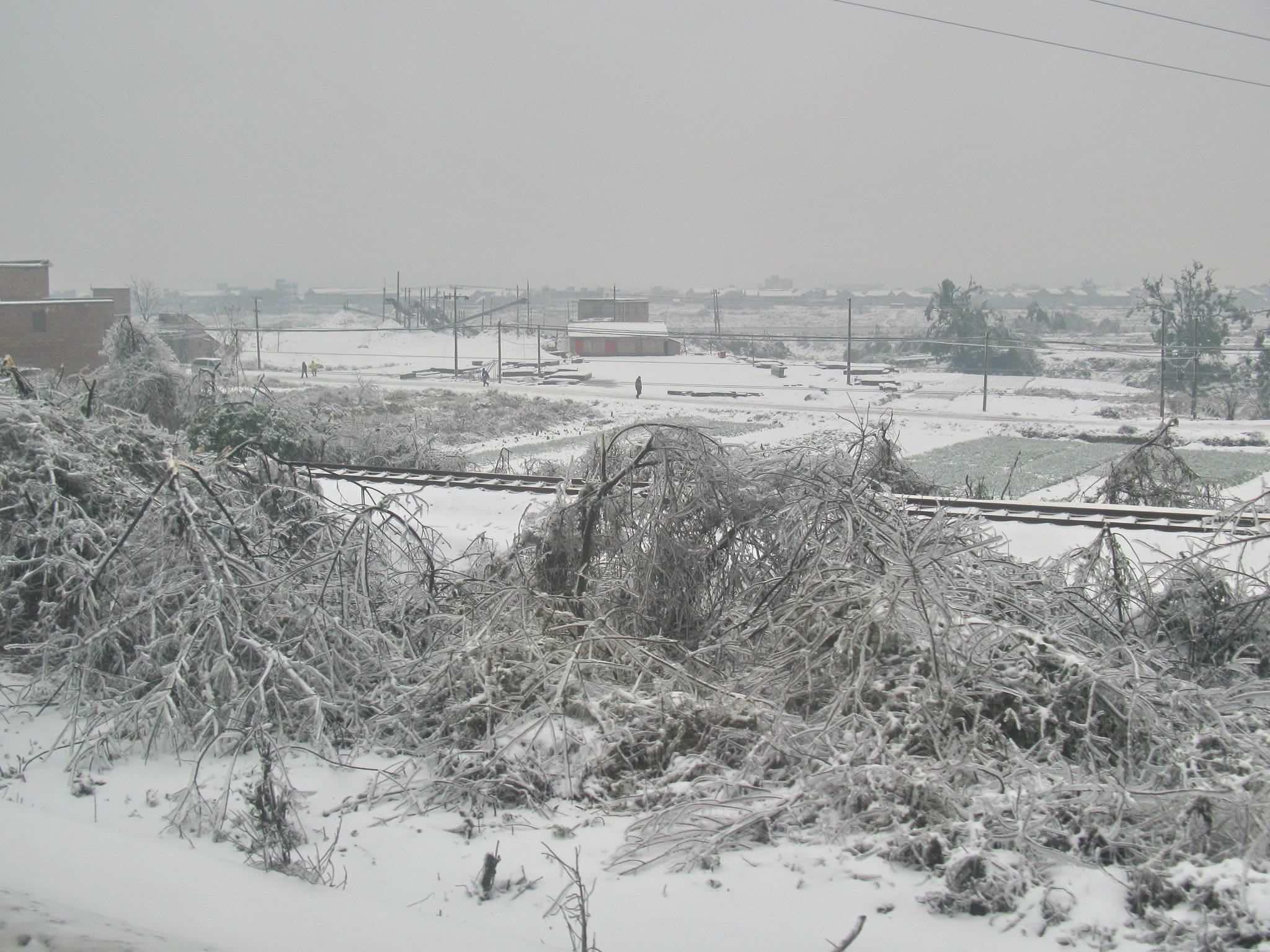 Leiyang_fallen-trees.jpg