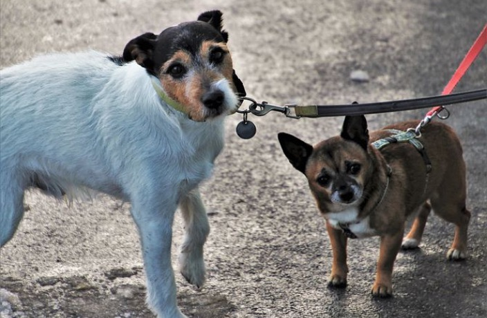 Walking the Dog in China? From May Onwards You Must Use a Leash