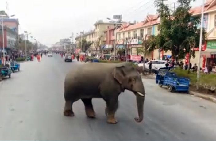 elephant-rampage-yunnan-1.jpeg