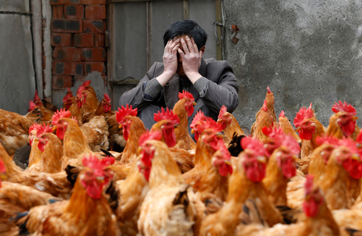 Eastern China Reports New Case of H7N9 Bird Flu