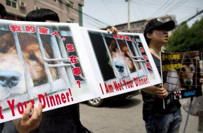 Activists  in Beijing Protest Yulin's Dog Meat Festival