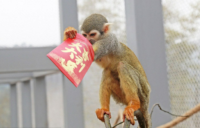 Monkey holding red packet