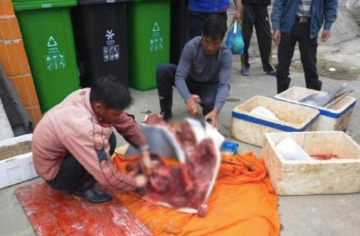 Dolphin Butchered and Beheaded in Guangdong