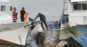 Giant Whale Found Dead off the Coast of Shanghai