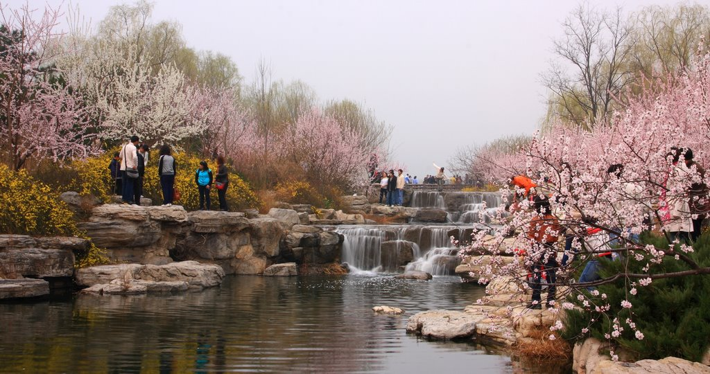 8 Places To See Beijing 39 S Spring Blossoms That S Beijing