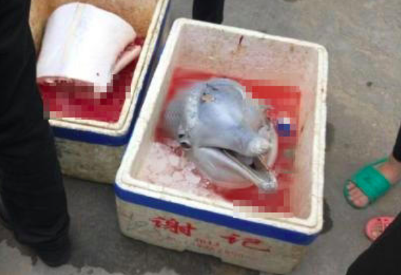 Dolphin-Butchered-and-Beheaded-in-Guangdong-3.png