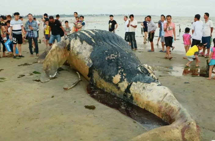 Yet-Another-Dead-Whale-Washes-Ashore-in-South-China-1.jpg