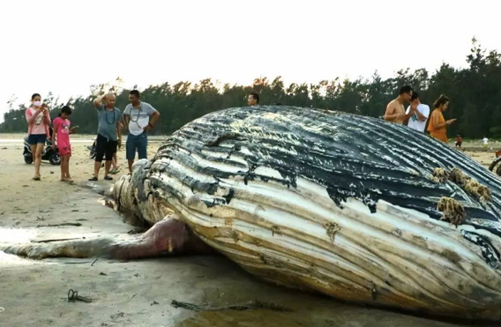 Yet Another Dead Whale Washes Ashore in South China