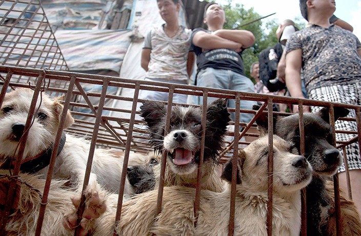 BREAKING: Dog Meat Reportedly Banned at Yulin Festival