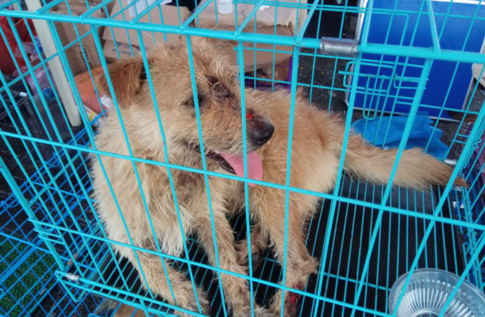 An-Insider-s-Account-of-This-Week-s-Dog-Rescue-in-Guangzhou-7.jpg