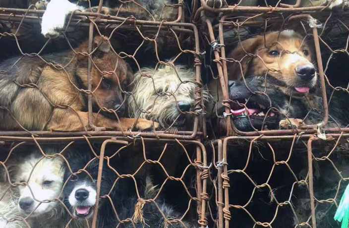 Dog-Meat-Still-on-the-Menu-at-Tomorrow-s-Controversial-Yulin-Festival-5.jpg