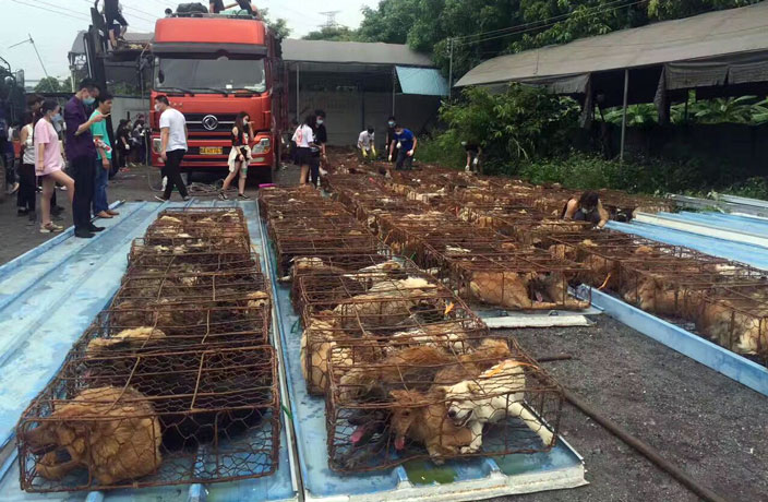 Dog-Meat-Still-on-the-Menu-at-Tomorrow-s-Controversial-Yulin-Festival-7.jpg