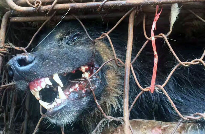 Dog Meat Still on the Menu at Controversial Yulin Festival