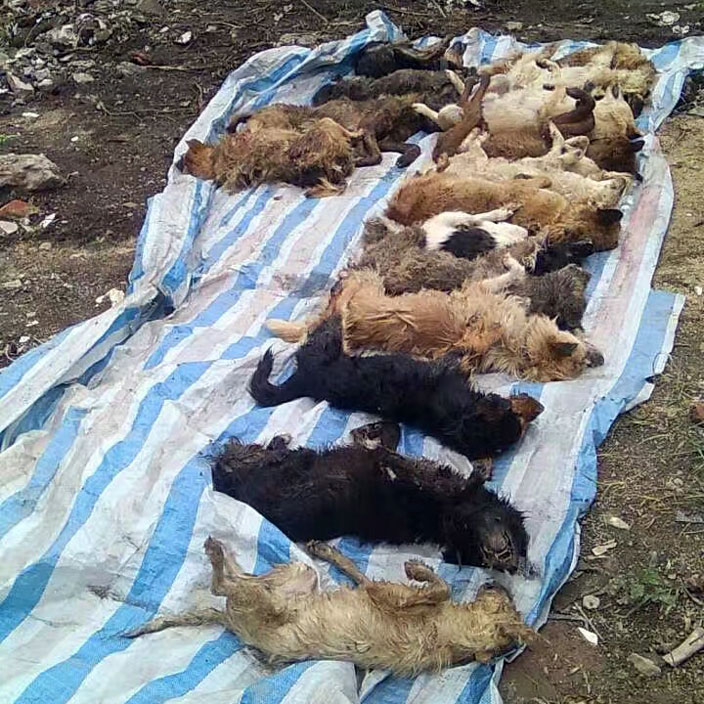 dead-dogs-removed-in-rescue.jpg