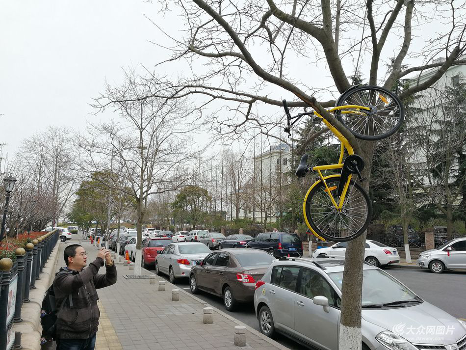 shared-bike-tree-1.jpg