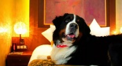 Beijing's Animal Lovers Willing to Pay RMB900 for Luxurious Pet Hotels